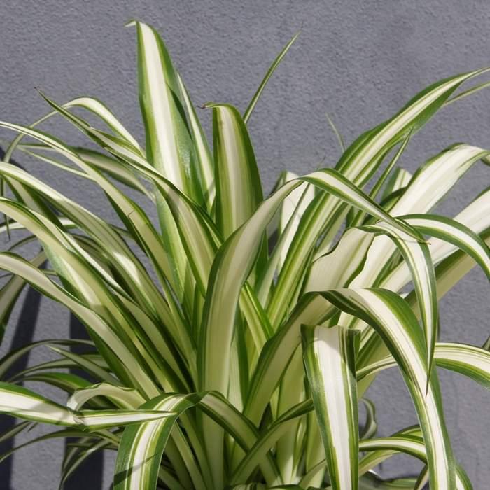 Zelenec PRO ZVÍŘATA 12cm květináč