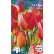 Tulipán Oxford Mix 25ks
