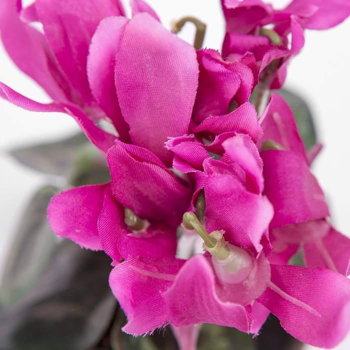 Brambořík umělý hrnkový purpurový
