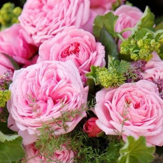 Růže Kordes Parfuma 'Rosengräfin Marie Henriette' 2L kontejner